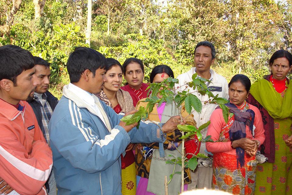 Nepal Organic Coffee Products Training